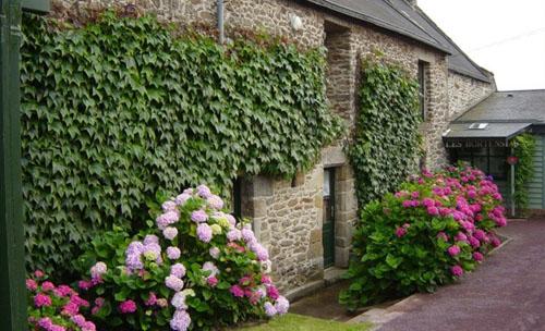 Longère bretonne avec hortensia